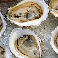 Fresh Oysters (6 pieces/dish)