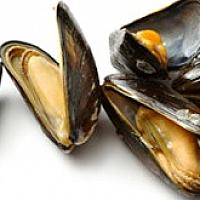 BBQ/Steamed New Zealand Mussels (6 pieces/dish)