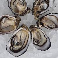Oysters (6pcs)