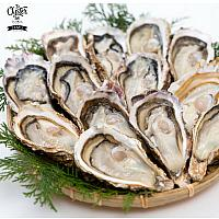 A Dozen of Import Oysters Selection by Shucker