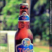 Пиво Tiger 0.33
