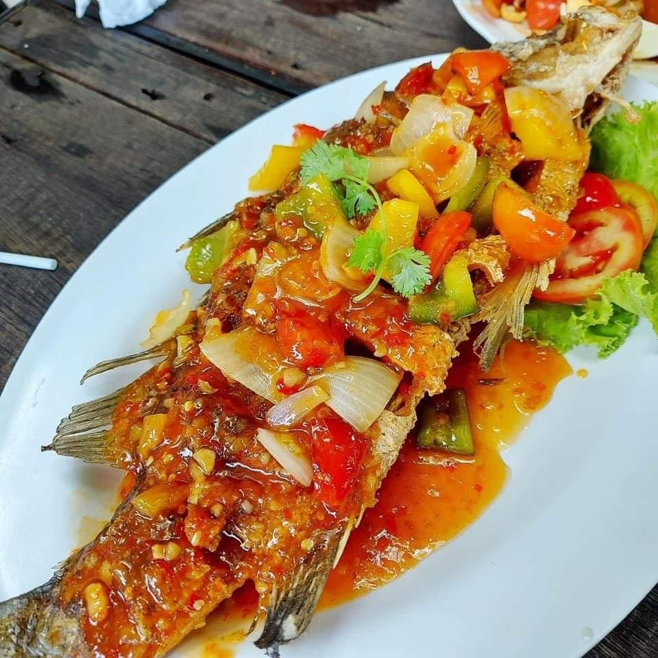 Red or white snapper